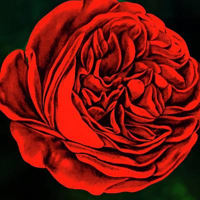 Digital Art -  Red Red Rose by Terry Fleckney
