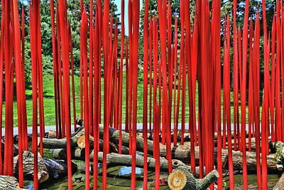 Photograph - Red Reeds On Logs # 1 by Allen Beatty