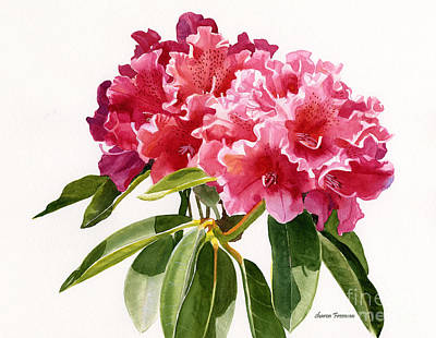 Red Rhododendron Blossoms Original