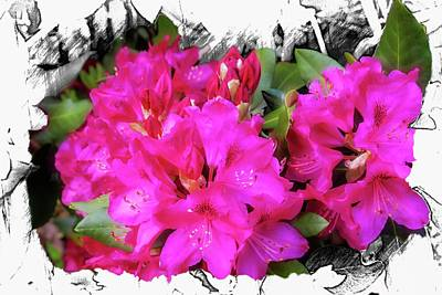 Digital Art - Red Rhododendron Flowers by Rusty R Smith