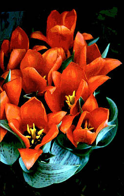 Photograph - Red Ridinghood Tulips by Janis Nussbaum Senungetuk Senungetuk