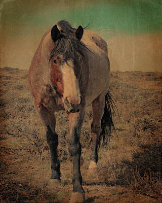 Photograph - Red Roan And Sage Brush by Amanda Smith