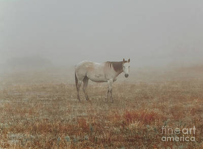 Western Pleasure Photograph - Red Roan In Mist by Robert Frederick