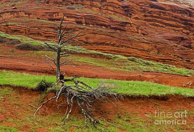 Photograph - Red Rock And Tree-signed-#8872 by J L Woody Wooden