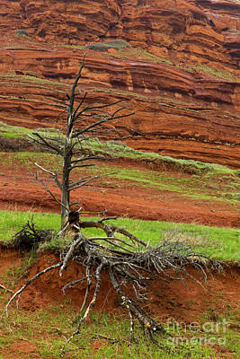 Photograph - Red Rock And Tree-signed-#8877 by J L Woody Wooden