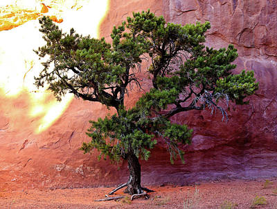 Photograph - Red Rock Bonsai by Athena Mckinzie
