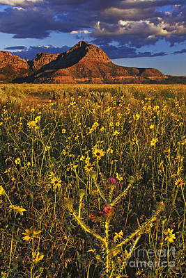 Photograph - Red Rock Buttes And Wildflowers Southern Utah by Dave Welling