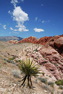 Photograph - Red Rock Canyon 5 by Marilyn Hunt