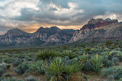 Photograph - Red Rock Canyon by Chuck Jason