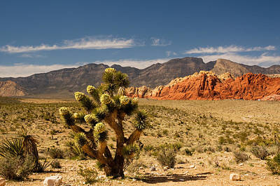 Photograph - Red Rock Canyon by Ginger Wakem
