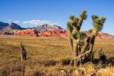 Photograph - Red Rock Canyon by Tim Hightower