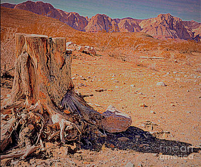 Photograph - Red Rock by Diane montana Jansson