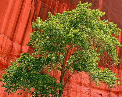 Photograph - Red Rock Green Tree by Joe Kozlowski