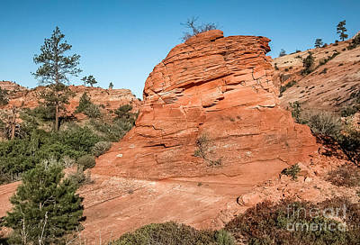 Palm Trees Rights Managed Images - Red Rock In Zion Royalty-Free Image by Al Andersen
