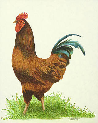 Painting - Red Rooster by Mary Ann King