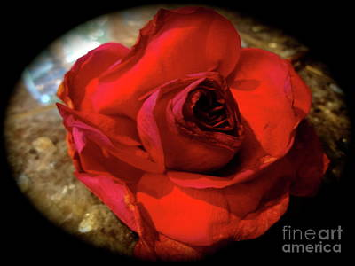 Painting - Red Rose 111 by Jenny Lee