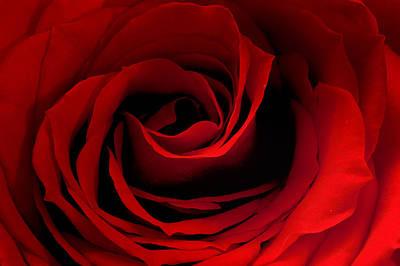 Photograph - Red Rose 2 by Joni Eskridge