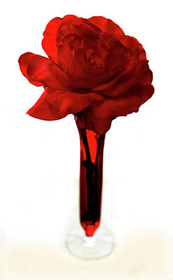 Rose Photograph - Red Rose 2 by Marilyn Hunt
