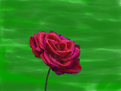 Photograph - Red Rose 2014 by Leif Sohlman