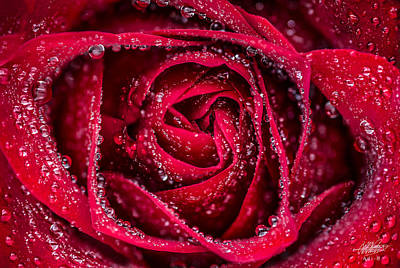 Photograph - Red Rose by Adnan Bhatti