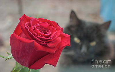 Red Rose And A Black Cat Original