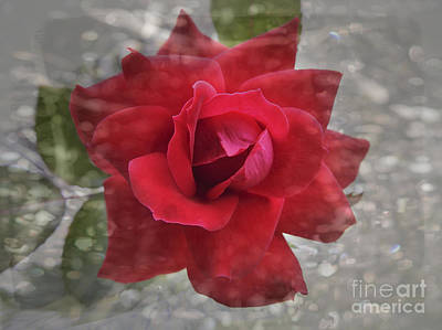 Photograph -  Red Rose And Sparkle by Ella Kaye Dickey