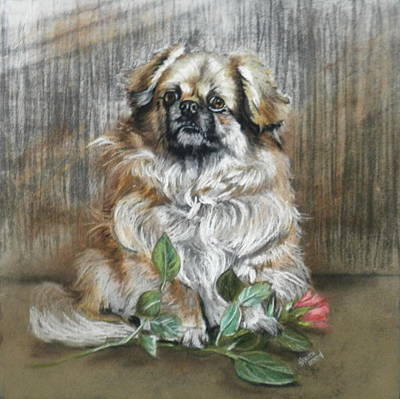 Pastel - Red Rose And Whiskers by Barbara Keith