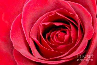 Print featuring the photograph Red Rose by DJ Florek