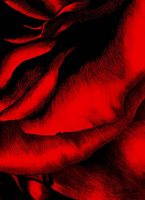 Painting - Red Rose by Fanny Diaz