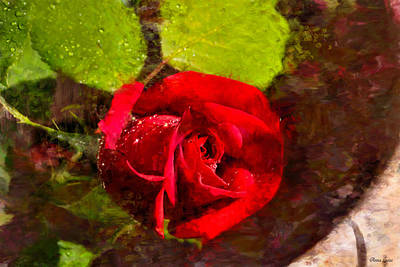Photograph - Red Rose Glisten by Anna Louise