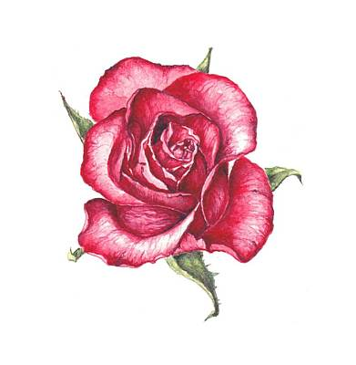Red Rose Art Print by Heidi Kriel