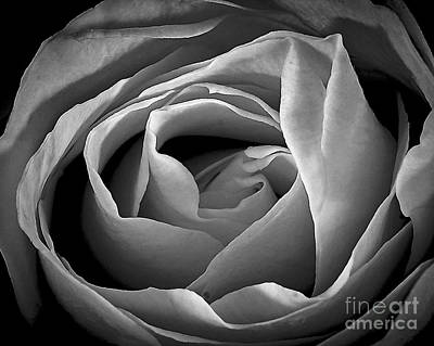 Photograph - Red Rose In Infrared by Charles Muhle