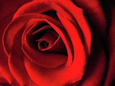 Jerry Sodorff Royalty-Free and Rights-Managed Images - Red Rose by Jerry Sodorff