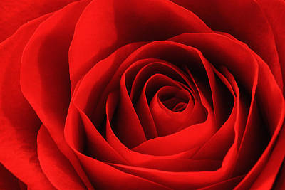 Photograph - Red Rose by Joni Eskridge