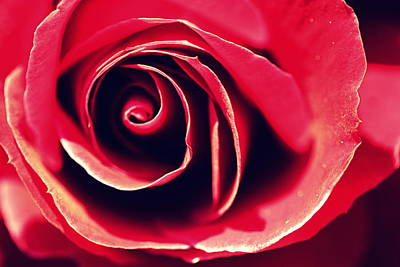 Photograph - Red Rose by Joseph Skompski