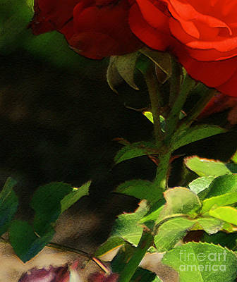 Photograph - Red Rose by Linda Shafer