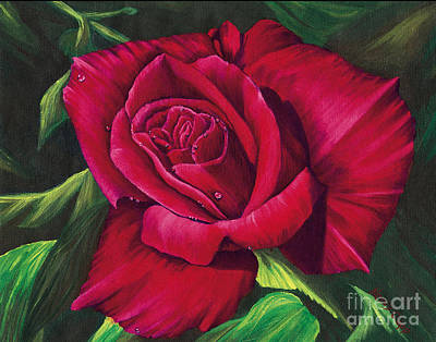 Red Rose Art Print