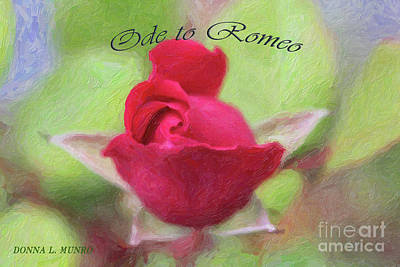 Digital Art - Red Rose Ode by Donna L Munro