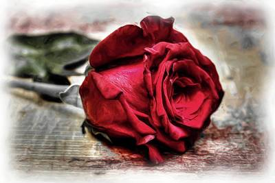 Digital Art - Red Rose Oil by Michael Damiani