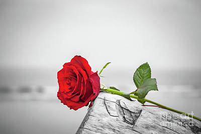 Photograph - Red Rose On The Beach. Color Against Black And White. Love, Romance, Melancholy Concepts. by Michal Bednarek