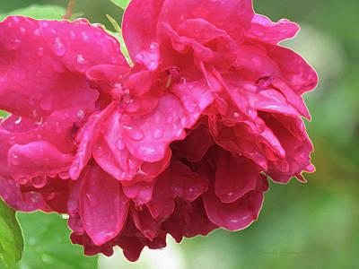 Raindrops Dance Photograph - Red Rose Rain Dance - 1st In A Series Of 6 by Brooks Garten Hauschild