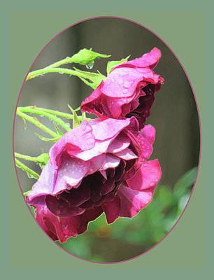 Raindrops Dance Photograph - Red Rose Rain Dance - 4th In A Series Of 6 by Brooks Garten Hauschild