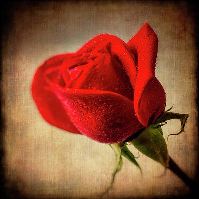 Red Rose Wall Art - Photograph - Red Rose Romance by Garry Gay