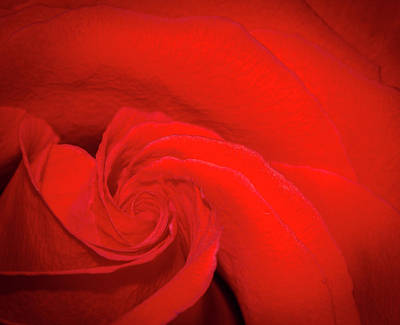 Photograph - Red Rose Swirl by Jean Noren