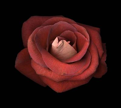 Photograph - Red Rose by Test