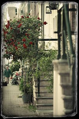 Photograph - Red Rose Tree And Stairs. Old Cards From Amsterdam  by Jenny Rainbow