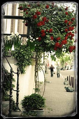 Photograph - Red Rose Tree. Old Cards From Amsterdam  by Jenny Rainbow
