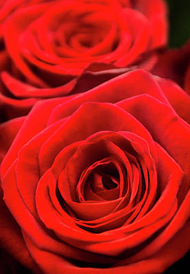 Photograph - Red Roses - Grand Prix by Lenny Carter