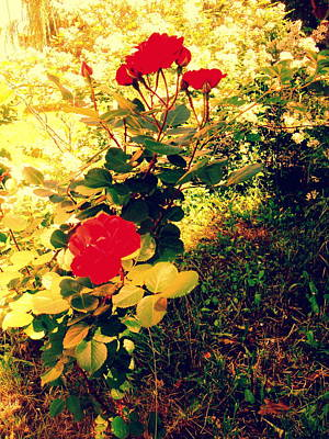 Photograph - Red Roses by Henryk Gorecki