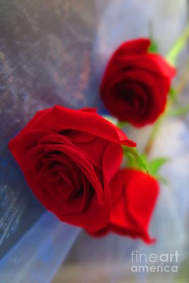 Photograph - Red Roses by Tara Shalton